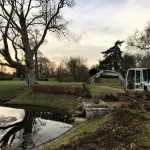 Removing beech hedge