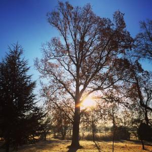 wild-garden-oak