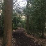 Woodland walk 2018