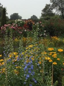 Sept walled garden