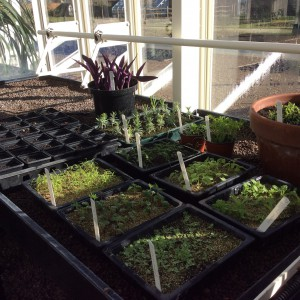Seeds and cuttings