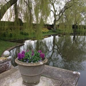 Lily pond spring
