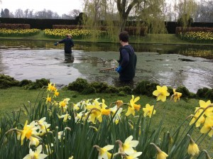 Cleaning lily pond
