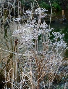 river-frost
